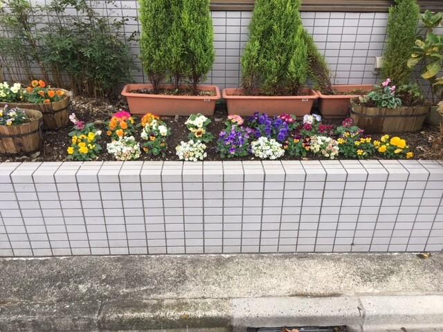 ほのぼの足立 先日植えた花壇の花が咲きました